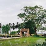 Giữ gìn giá trị làng cổ Đường Lâm