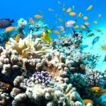 Trải nghiệm một chuyến lặn biển ngắm san hô trong vịnh Nha Trang