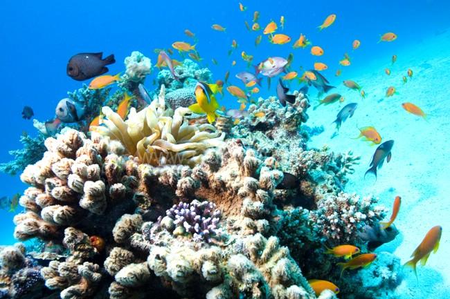 Lặn biển Nha Trang ngắm san hô