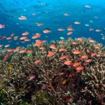 Lặn biển ngắm san hô ở đảo ngọc Cát Bà