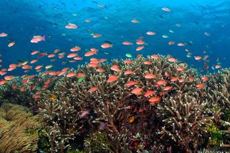 Ngắm san hô ở biển Cát Bà