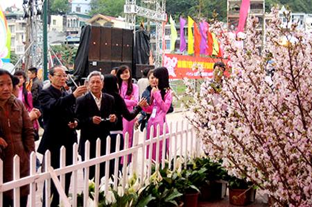 Lễ hội hoa Anh đào Hạ Long 2015 được tổ chức vào 2 - 5/4