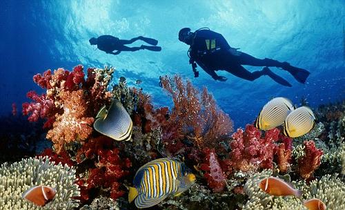 Lặn biển ngắm san hô tại đảo An Thới