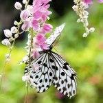 Sắc màu vườn bướm nhiệt đới giữa lòng Đà Nẵng