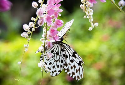 Vẻ đẹp tuyệt trần của không gian vườn bướm