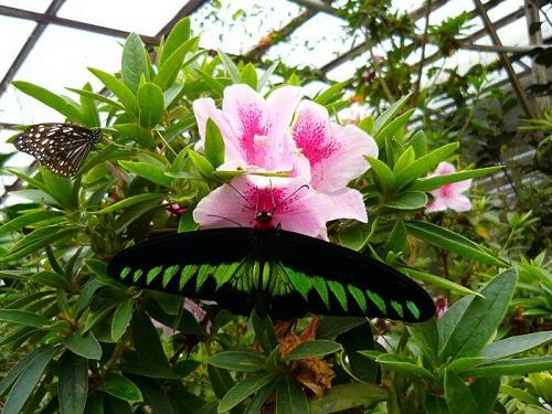 Nơi đây đa dạng về loài bướm và đa dạng các loài hoa