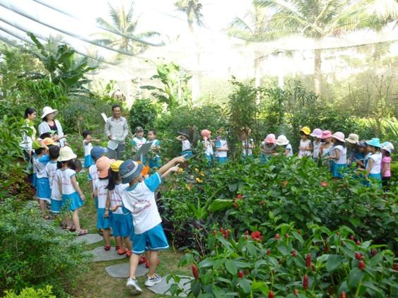 Khu vườn bướm nhiệt đới giữa lòng Đà Nẵng