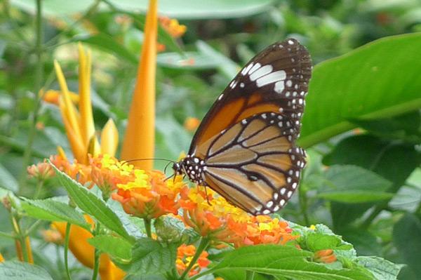 Sắc màu đa dạng của các loài bướm