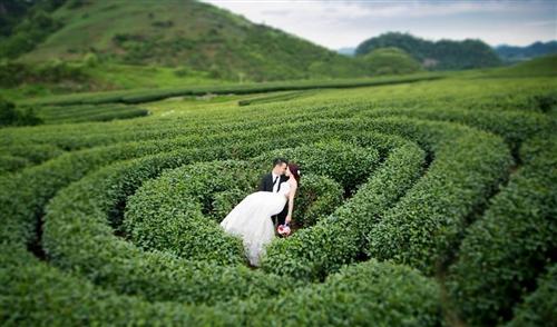 Chụp ảnh cưới tại đồi chè Mộc Châu