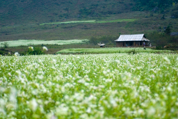 Thung lũng hoa cải