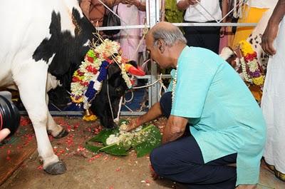 Ngày thứ 3 của lễ hội Pongal