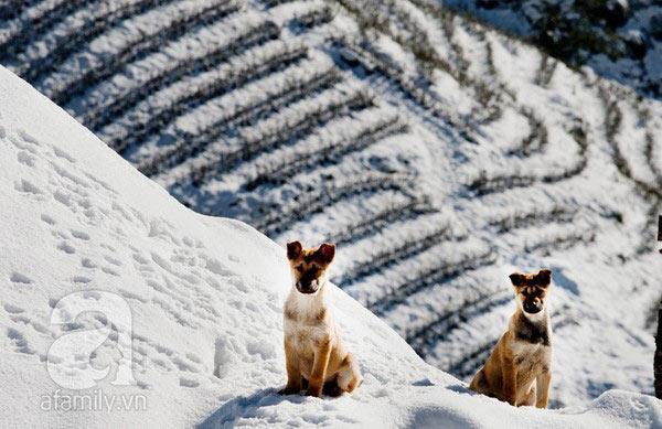 Ruộng bậc thang đầy tuyết ở Sapa